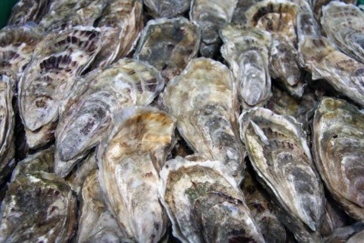 Can Dogs Eat Oysters