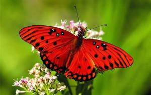 11 Butterfly