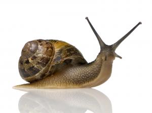 12 snail