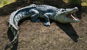 5 crocodile