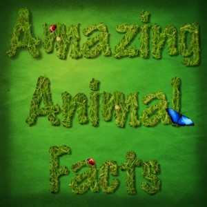 amazing animal facts