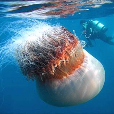 7 humungous sea creatures