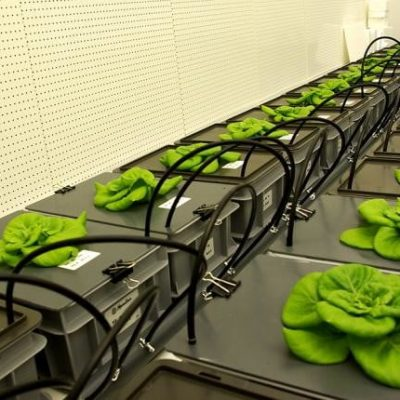 Artificial soil from lava rock can help to grow food in space